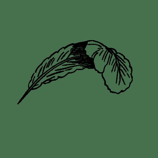 blogdunedeplumee